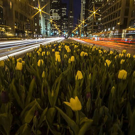 Sven Brogren - Flowers at night on Chicago