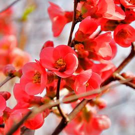 Damijana Cermelj - Flowers