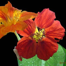 RC deWinter - Flowers for Ebie