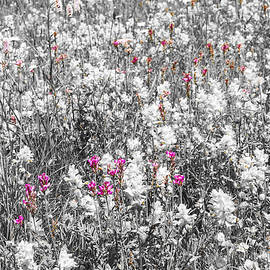 Paul MAURICE - Flowers in the fields