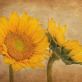 Kim Hojnacki - Flowers of the Sun