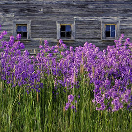 Nikolyn McDonald - Flowers - Windows in Weathered Barn #2