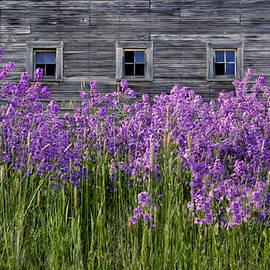 Nikolyn McDonald - Flowers - Windows in Weathered Barn