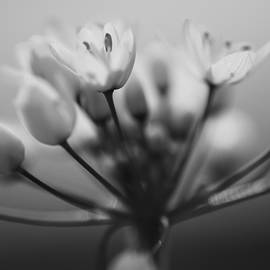 Yaniv Eitan - Flowers