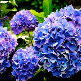 Barbara Zahno - Flowery Blues