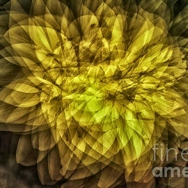 Georgianne Giese - Flowery Fanthom Vibration