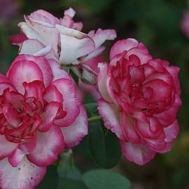 Dimitry Papkov - Flowery Love 2