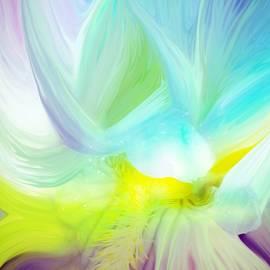 Jenn Teel - Flowing Iris