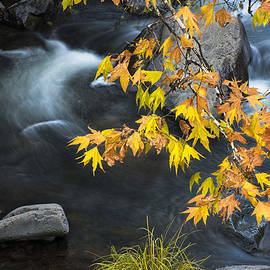 Dave Dilli - Flowing Oak Creek Canyon under Colorful leaves