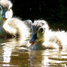 Selma Glunn - Fluffy Baby Wood Ducks