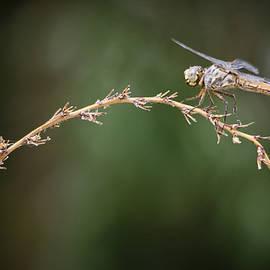 Saija  Lehtonen - Fly Little Dragonfly