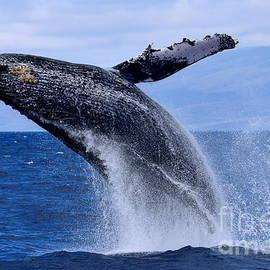 Jackson Kowalski - Flying Ocean Giant