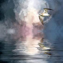 Cyndy Doty - Flying Towards the Light