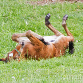 Lloyd Alexander - Foal on the Roll