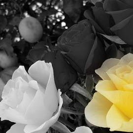 Dianne Pettingell - Focal Yellow Rose