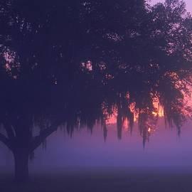 Warren Thompson - Fog at Sunrise