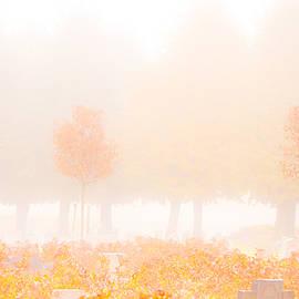 Maggie Terlecki - Fog Swept In