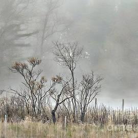 Marcia Lee Jones - Foggy Day Bliss