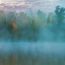 Stuart Deacon - Foggy Forest