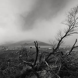Richard Leon - Foggy Grapevine