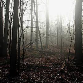 Debbie Oppermann - Foggy Woods In Fall