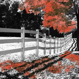 Betsy Zimmerli - Foliage Focus