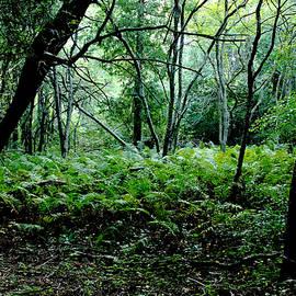 Debbie Oppermann - Forest Ferns