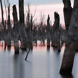 Jennifer Lyon - Forest in the Water