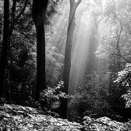 Vishwanath Bhat - Forest light in Western Ghats Karnataka India