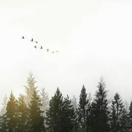 Nicklas Gustafsson - Forest