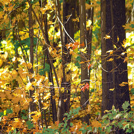Hal Halli - Forest of Autumness
