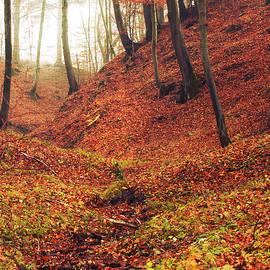 Forest of november - Joanna Jankowska