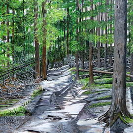 Marilyn  McNish - Forest Path
