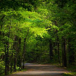 Parker Cunningham - Forest Path
