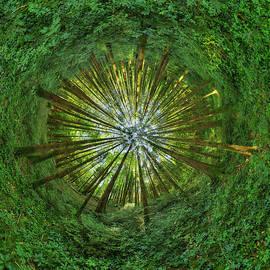 Patrick Jacquet - Forest sphere