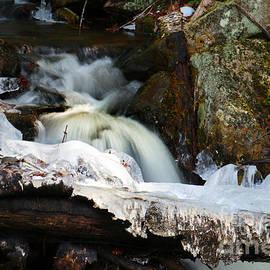 Mim White - Forest Stream