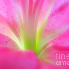 Forever In Pink - Krissy Katsimbras