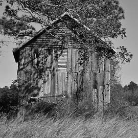 Cynthia Guinn - Forgotten Barn