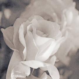 Jennie Marie Schell - Forgotten Ivory Roses