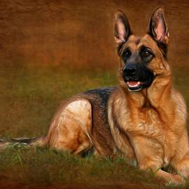 Angie Tirado - Forrest The German Shepherd