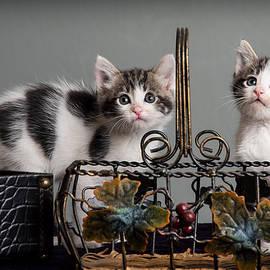 Janis Knight - Foster Kittens