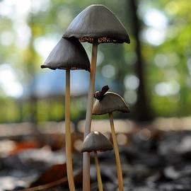 Mike Quinn - Four Mushrooms