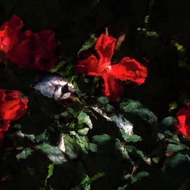 HH Photography of Florida - Four Red Roses