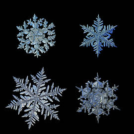 Alexey Kljatov - Four snowflakes on black background