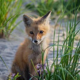 Bill Wakeley - Fox Kit