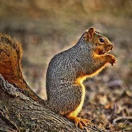 Allen Martin - Fox Squirrel Greeting the Sun