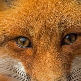 Steve Dunsford - Foxy Eyes