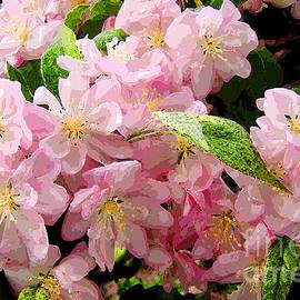 Betsy Zimmerli - Fragrant Pink