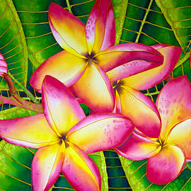 Daniel Jean-Baptiste - Frangipani Flower