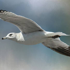 HH Photography of Florida - Free Bird - Seagull In Flight